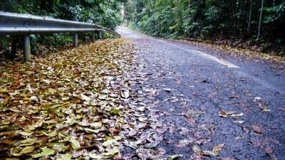 Leaves on the road in the fall.
